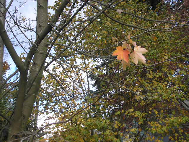 fall-leaves-005