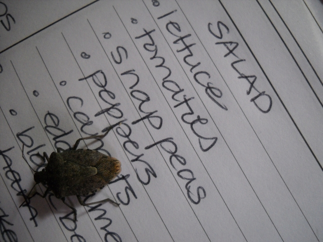 Even if stink bugs are readers, I still don't like them!